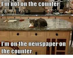 Newspaper Cat Meme - i m not on the counter i m on the newspaper on the counter grumpy