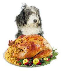 a savory thanksgiving treat for dogs fido universe