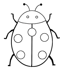 drawing ladybug insect colouring colouring pics