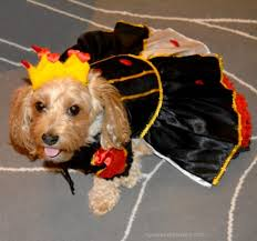 Yorkie Halloween Costume Yourdesignerdog Blog Yourdesignerdog