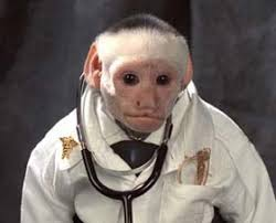 dr irving the white faced capuchin monkey resume monkey hanging from chandelier good answer resume community