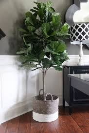 Indoor Decorative Trees For The Home Best 25 Fake Plants Ideas On Pinterest Hanging Terrarium