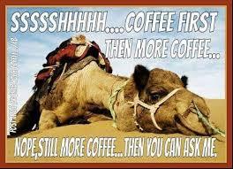 Camel Meme - camel meme coffee quote coffee quotes pinterest coffee quotes