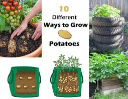 Patio Potato Planters 10 Ways To Grow Potatoes Potato Planting Ideas Balcony Garden Web
