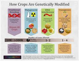 dna and gm foods the logical place