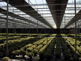 Greenhouse Lights Ap Holland Blackout And Light Emission Screens