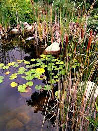 pond pumps are not required in made ponds