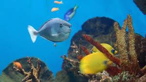 aquarium barcelona book tickets u0026 tours getyourguide