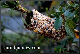 easy bird feeder mindy writes