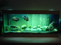 aquarium decoration for oscar fish aquarium plants