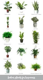 indoor plants that need no light luxury plants that need no light and picture of plant indoor office