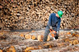 mercier wood flooring thetimberhound com