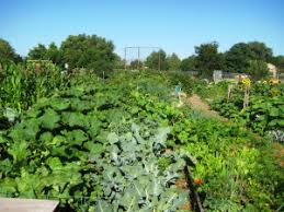 Urban Garden Denver - denver urban gardens city farmer tm