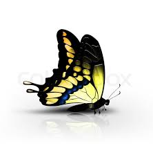 beautiful yellow butterfly on a white background side view