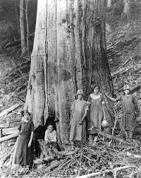 Forest And Waves State Of by The Lord Of The Forest The American Chestnut U2013 Our State Magazine