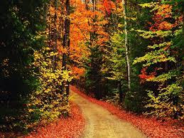 cute fall desktop wallpaper autumn wallpaper for mac wallpapersafari