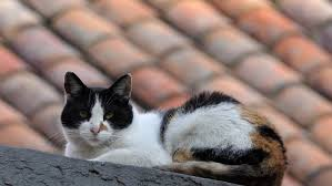 Cats In Small Spaces Video - black cat on the roof stock footage video 16122262 shutterstock