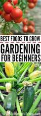 Vegetables For Container Gardening by Best 25 Vegetables Garden Ideas On Pinterest Vegetable