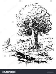 Oak Tree Drawing Romantic Landscape Big Old Oak Tree Stock Vector 235970842