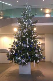 live christmas trees for rent from superplants superplants