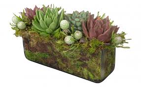 succulent arrangements succulent rectangle arrangement jayson home