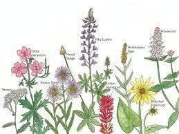 native plants of montana mount harrison