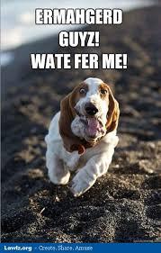 Ermahgerd Animal Memes - image ermahgerd animals dog meme guyz wate fer me guys wait for me