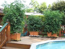 2010 star customers the garden patch growbox