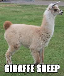 Drunk Giraffe Meme - 35 better names for animals will have you rolling on the floor photos