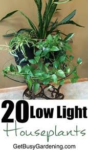 Fragrant Indoor House Plants - 23 low light houseplants that are easy to maintain and nearly