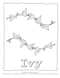 leaf coloring page ivy our coloring pages of ivy leaves