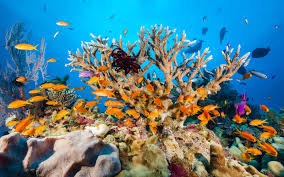 thanksgiving reefs great barrier reef faces severe coral bleaching photos show