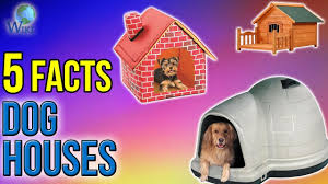 Are Igloo Dog Houses Warm Dog Houses 5 Fast Facts Youtube