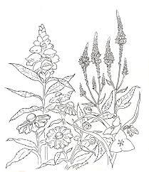 152 best michigan native plants images on pinterest native