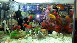 home aquarium tropical fish youtube
