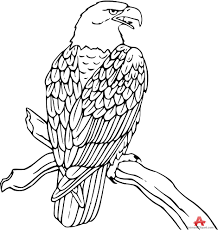 cute eagle coloring pages virtren com