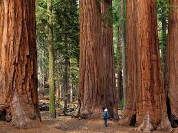 most beautiful place in america explore sequoia national park california today u0027s homepage