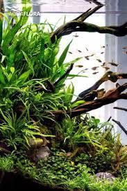 Aquarium Aquascaping Aquascaping Driftwood Page Fish Tank Pinterest Driftwood