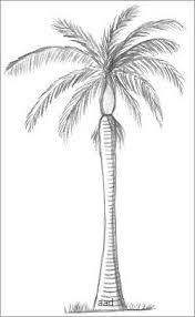 drawn palm tree easy pencil and in color drawn palm tree easy