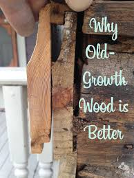 why old growth wood is better the craftsman blog