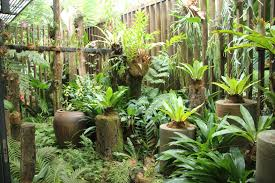 growing ferns at home