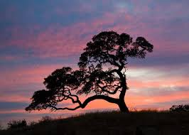44 best hill country trees images on hill