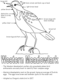 western meadowlark with labels