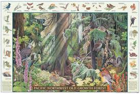 native plant guide pacific northwest old growth forest poster field guide from good