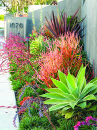 49 best california native plants low water and low maintenance california friendly gardens strive