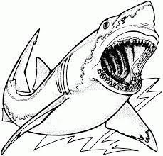 coloring pages sharks and dolphins tags coloring pages shark