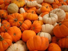 halloween pumpkin desktop backgrounds pumpkin bisque recipe supreme design by dianne ross