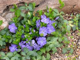 native plants ontario native wild plants for sale lowest wholesale native plant prices