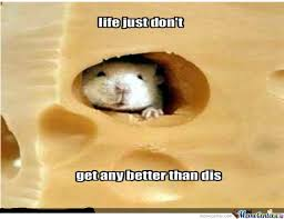 Cheese Meme - mouse in cheese by recyclebin meme center