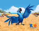 Rio et les animaux en voie de disparition